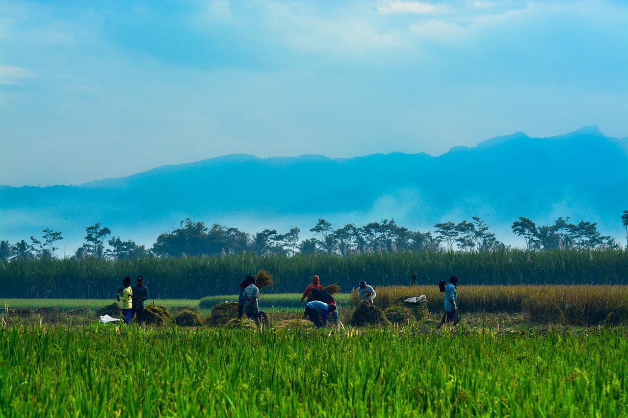 tarım destekleri