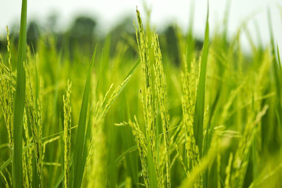tarım ve hayvancılık